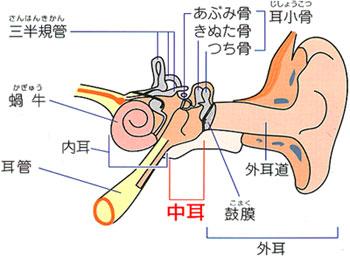 掃除 子供 耳鼻 科 耳