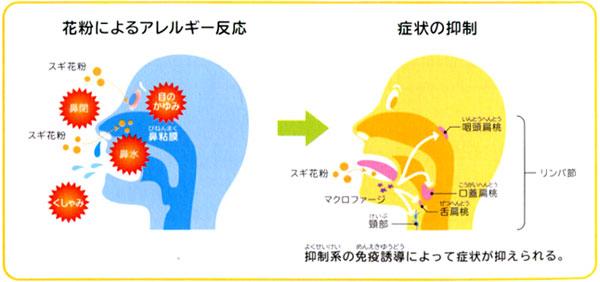 免疫 療法 下 舌